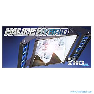 ReefBrite_ProductMain_HallideHybrid-300x300